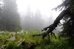Misty and mysterious forest. The Mountain ` Zyuratkul.` Ural. Autumn stock photography