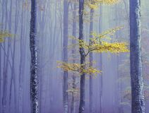 A misty mystical forest,. Tree trunks and branches with bright leaves. Artistic photo, repetition of lines stock photos