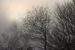 Misty nature Stock Image