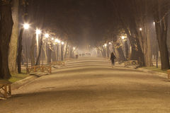 Misty night in the park Stock Image