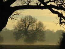 Misty oak framed royalty free stock photo