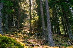 Misty Old Forest Nature, muschio fotografia stock