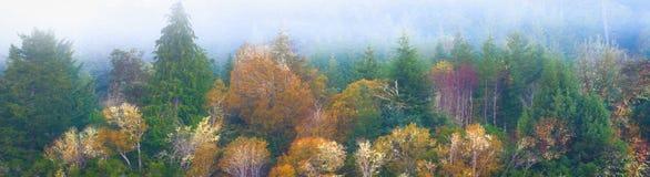 Misty Oregon Forest Fall Picture fotografia stock
