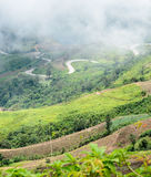 Misty over the sharp curve road. Mist lying in the S-curve road on the mountain royalty free stock photography