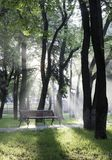 Misty park  Stock Photography