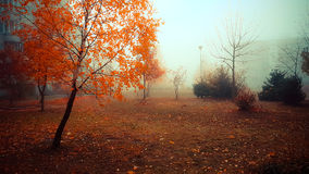 Misty park in autumn Stock Photography