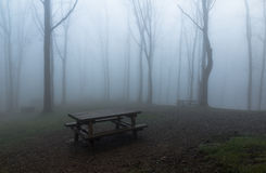 Misty Park. Picnic tables in a misty forest on winter in the Basque country,Spain,Europe Royalty Free Stock Photos