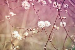 Misty pastel wildflowers and branches stock photo