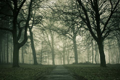 Misty Path Royalty Free Stock Image