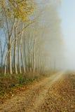 Misty path. A misty path crossing a foggy forest Stock Photos