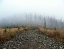 Misty path. Turist path in front misty forest Stock Photography