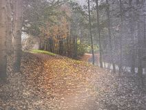 Misty path in autumn woods Royalty Free Stock Photography