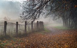 Misty path in the park on early foggy autumn morning. Old fence, autumnal trees and road going into perspective disappearing in f royalty free stock photo