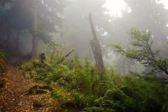 Misty path Royalty Free Stock Images