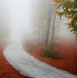 Misty path Stock Photo