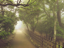 Misty pathway Royalty Free Stock Photo