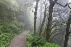 Misty pathway through woods Stock Photos