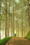 The Misty pine forest at North of Thailand Stock Photography