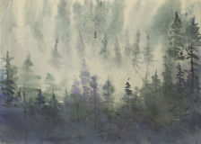 Misty pine forest Stock Photos