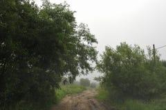 misty pola zdjęcie royalty free