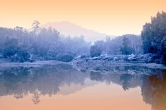 Misty pond Stock Photo