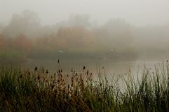 Misty pond Stock Image