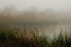 Misty pond. Misty Autumn Pond with birds in flight stock image