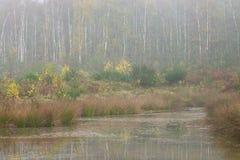 Misty Pond. A pond in Duisburg/Germany, taken in mild mist royalty free stock image