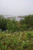 Misty pond Stock Photo