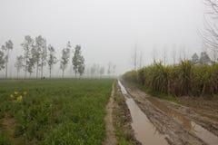 Misty Punjabi fieldscape Royalty Free Stock Images