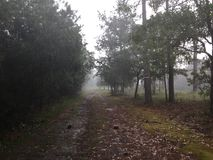 Misty Rain abajo de una trayectoria larga imagenes de archivo