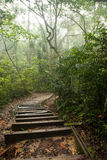 Misty rain forest stock images