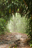 Misty rain forest stock photos