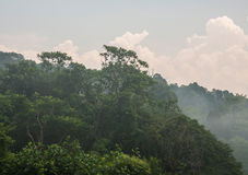 Misty rain forest stock photography