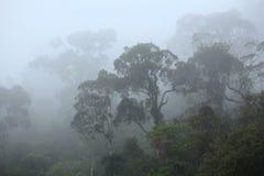 Misty rainforest Stock Photography