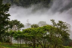 Jungle in Costa Rica. Misty Rainforest in Costa Rica, Central America royalty free stock image