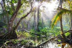 Jungle in Costa Rica. Misty Rainforest in Costa Rica, Central America stock photo