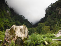 Misty Rainforest in lagere Annapurna Himalayagebergte Royalty-vrije Stock Foto's