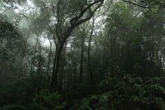 Misty rainforest in Mt.Kinabalu National Park Stock Photo