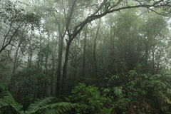 Misty rainforest in Mt.Kinabalu National Park Royalty Free Stock Image