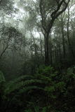 Misty rainforest in Mt.Kinabalu National Park Royalty Free Stock Photos