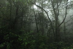 Misty rainforest in Mt.Kinabalu National Park Stock Photography