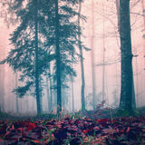 Misty red color woods Stock Images