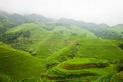 Misty Rice Terraces Royalty Free Stock Photography