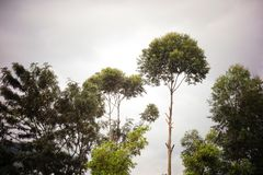 Misty Ridge Trees Silhouetted no fulgor da manhã imagens de stock
