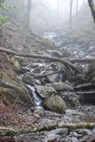 Misty River Royalty Free Stock Photography