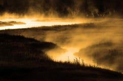 Misty River i morgon med flodstrandskogen Arkivfoton