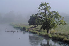 Misty riverside morning. Early morning mist on the river Cam at Ely, Cambridgeshire, England, UK, with ducks in distance royalty free stock photography