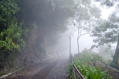 Misty road Stock Photography