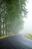 Misty road Stock Images